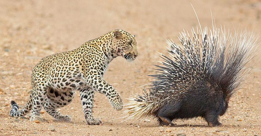 Porcupine Cybersecurity Solution